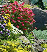 colorful-rock-garden-plants-1